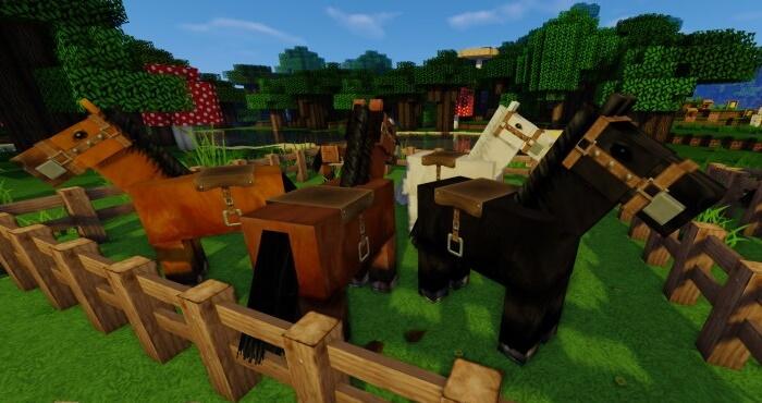 Chroma Hills Horses
